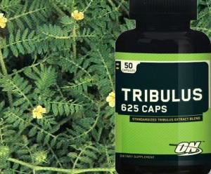 Tribulus Terrestris planta e suplemento