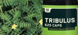 Tribulus terrestris: A erva afrodisíaca usada também no ganho de massa muscular