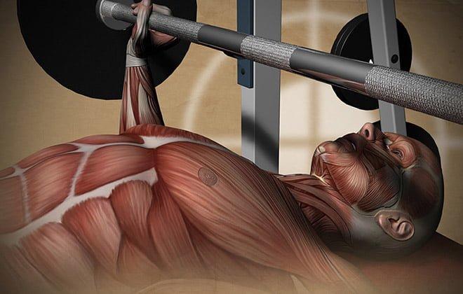 Tipos de fibras musculares brancas rápidas e vermelhas lentas
