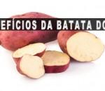 Batata Doce – O carboidrato do bem – Seus Benefícios e Receitas