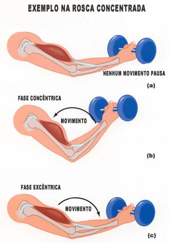 fase excentrica e concentrica musculacao exercicios