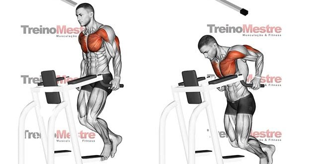 Barras paralelas, execução correta e ativação muscular