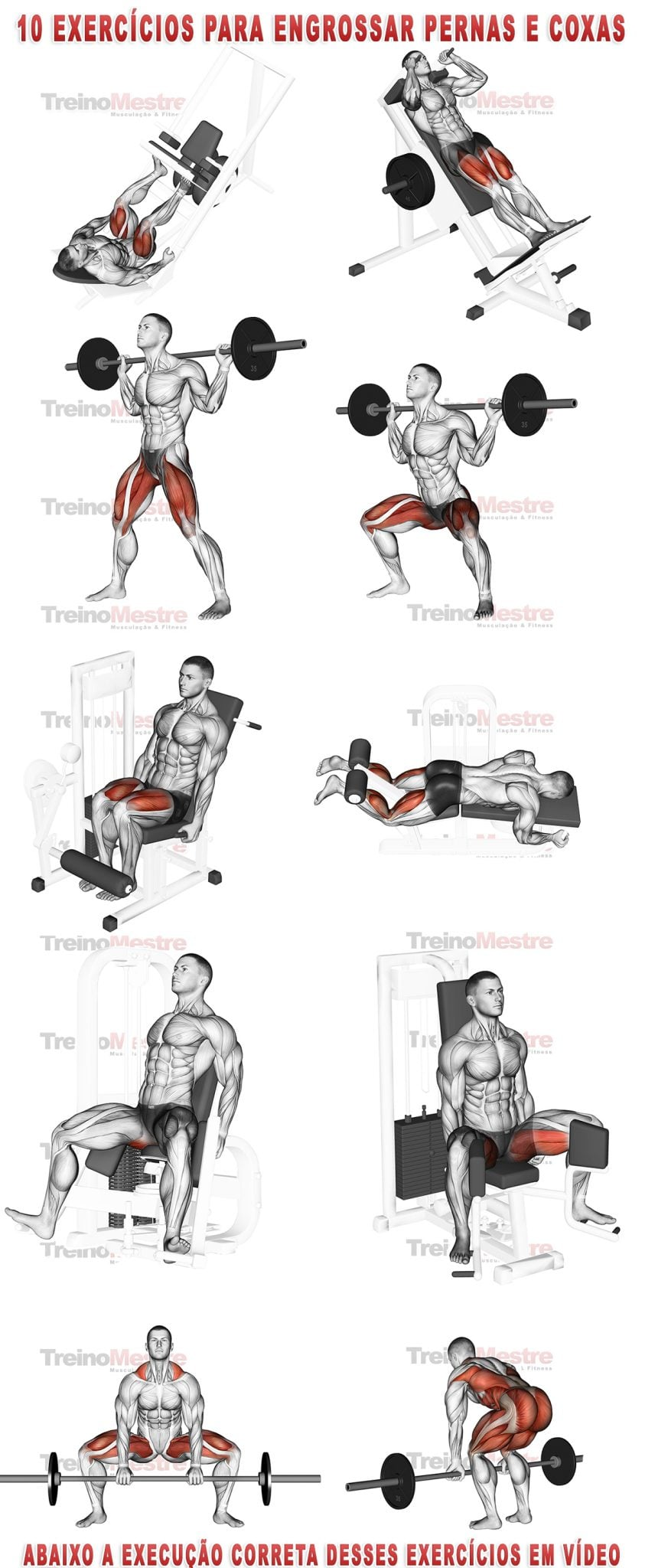 Barbell Seated Good Morning  YouTube