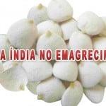 Noz da Índia – Seus benefícios no emagrecimento, contraindicações e efeitos colaterais