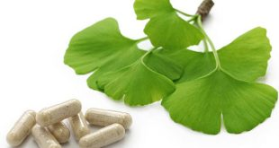ginkgo biloba para que serve e beneficios