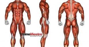 Hipertrofia muscular, o guia completo para ter melhores resultados!