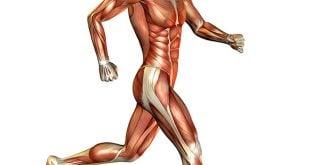 Treino de corrida e musculacao, como combinar