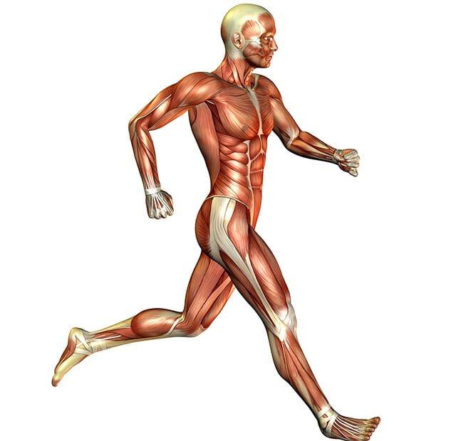 Treino de corrida e musculação, como combinar