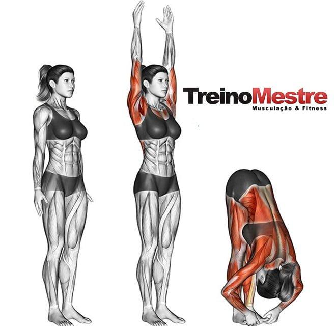 flexibilidade e hipertrofia treino exercícios