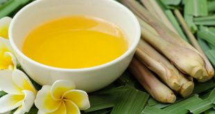 planta capim citronela oleo