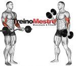 Exercícios com barra ou halter, há diferença na solicitação muscular?