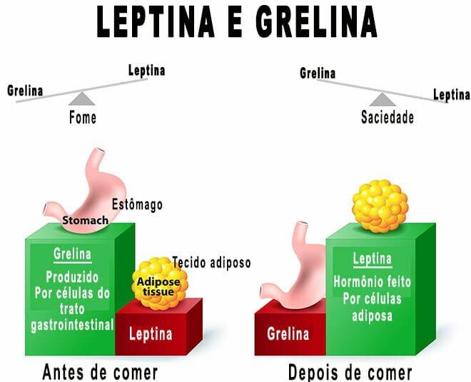 Leptina e grelina funções