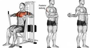 5 Exercícios que um iniciante precisa ter em seu treino