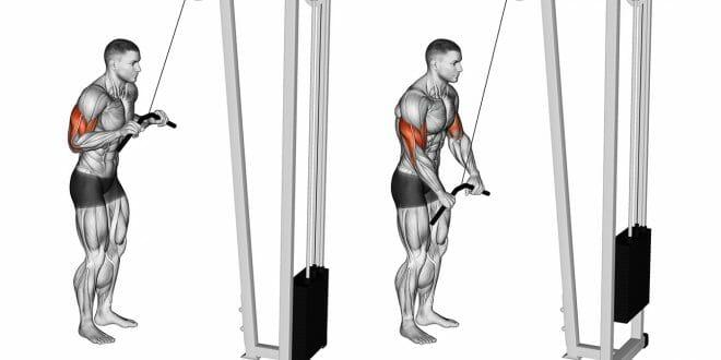Tríceps pulley: variações do exercício, execução e formas de melhorar os resultados