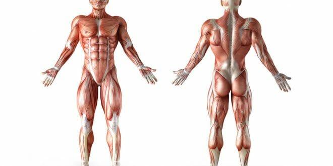 Recuperação muscular, 10 dicas para otimizá-la e ter melhores resultados!