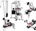 Treino de peito e tríceps para iniciantes, dicas importantes!
